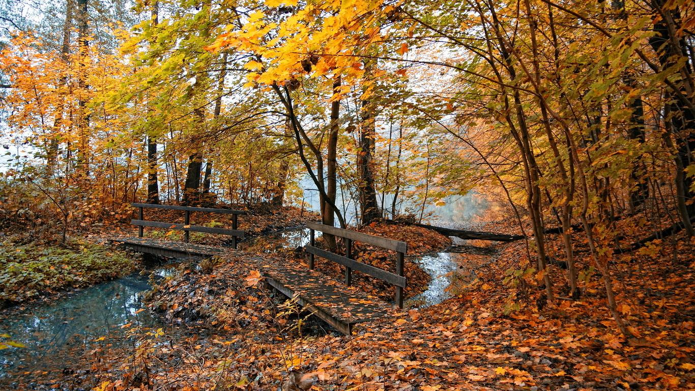 Wallpaper bridge a swamp Fall Fall widescreen on the desktop 1366x768