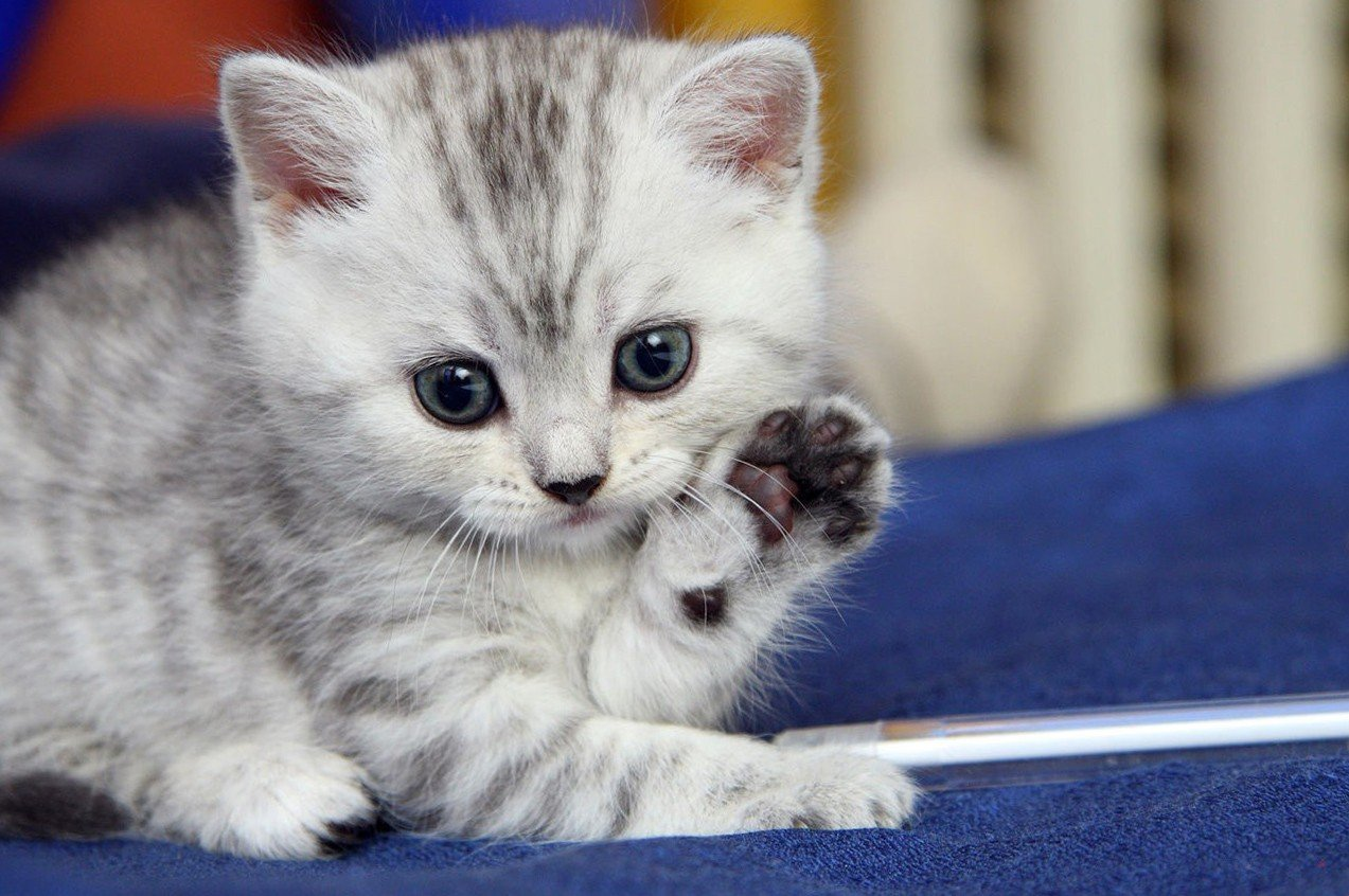 Cute Animal Cat Wallpaper Hd One plus Wallpapers 1273x846