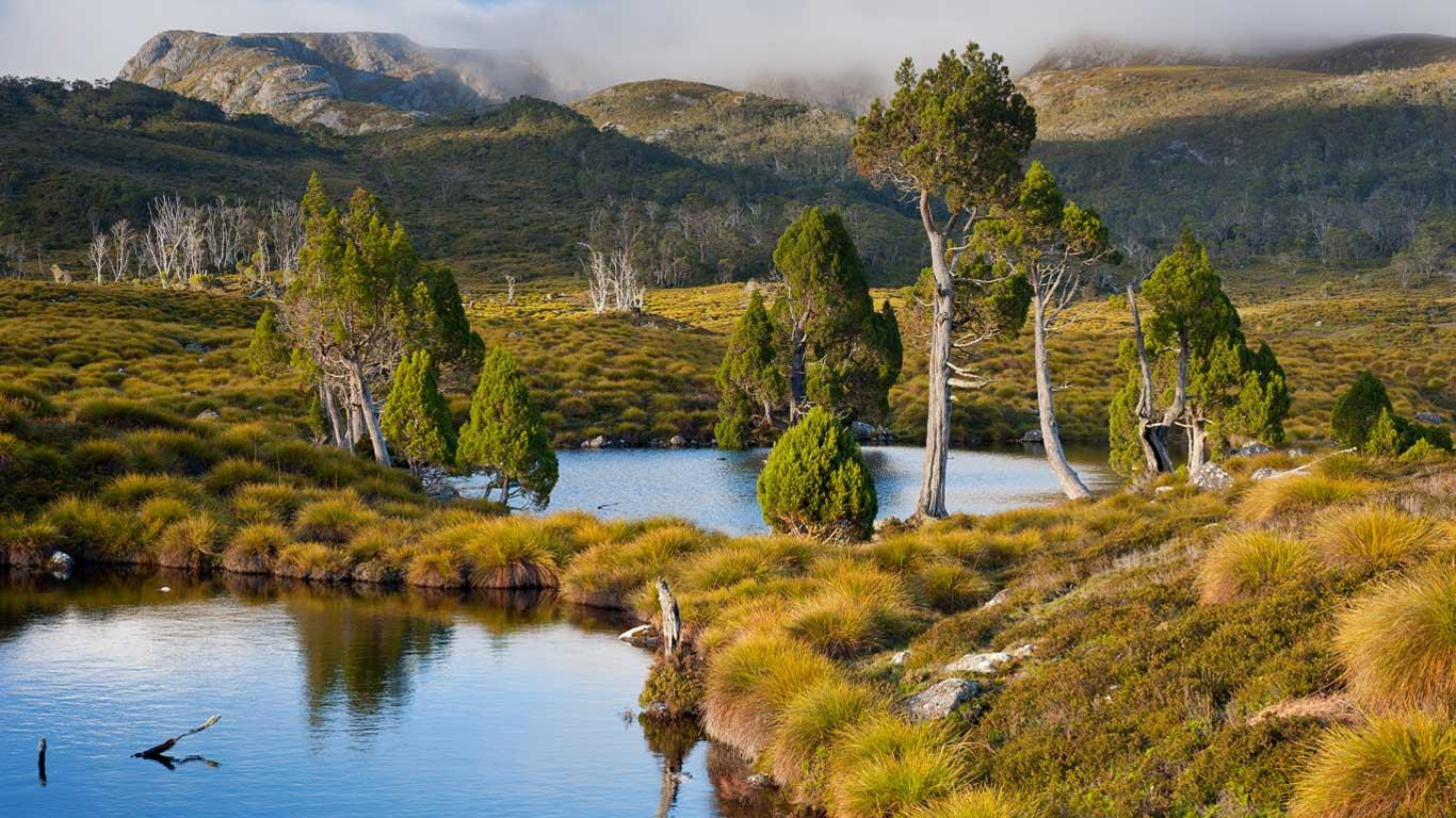 Mountain tarns ringed with pencil pines on Cradle Mountain Lake St 1366x768