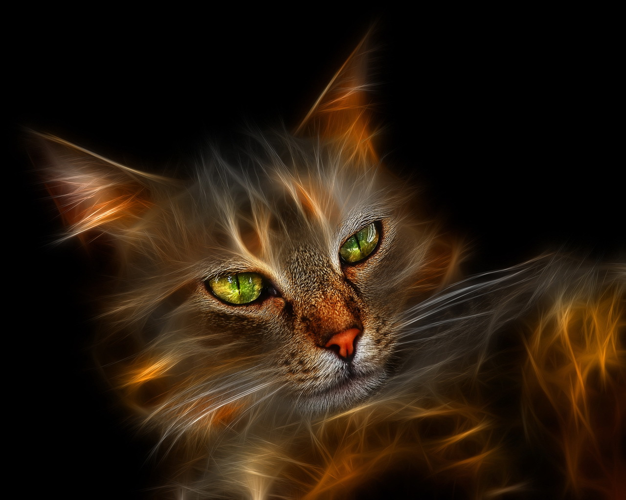 Fire cat wallpapers and images   wallpapers pictures photos 1280x1024