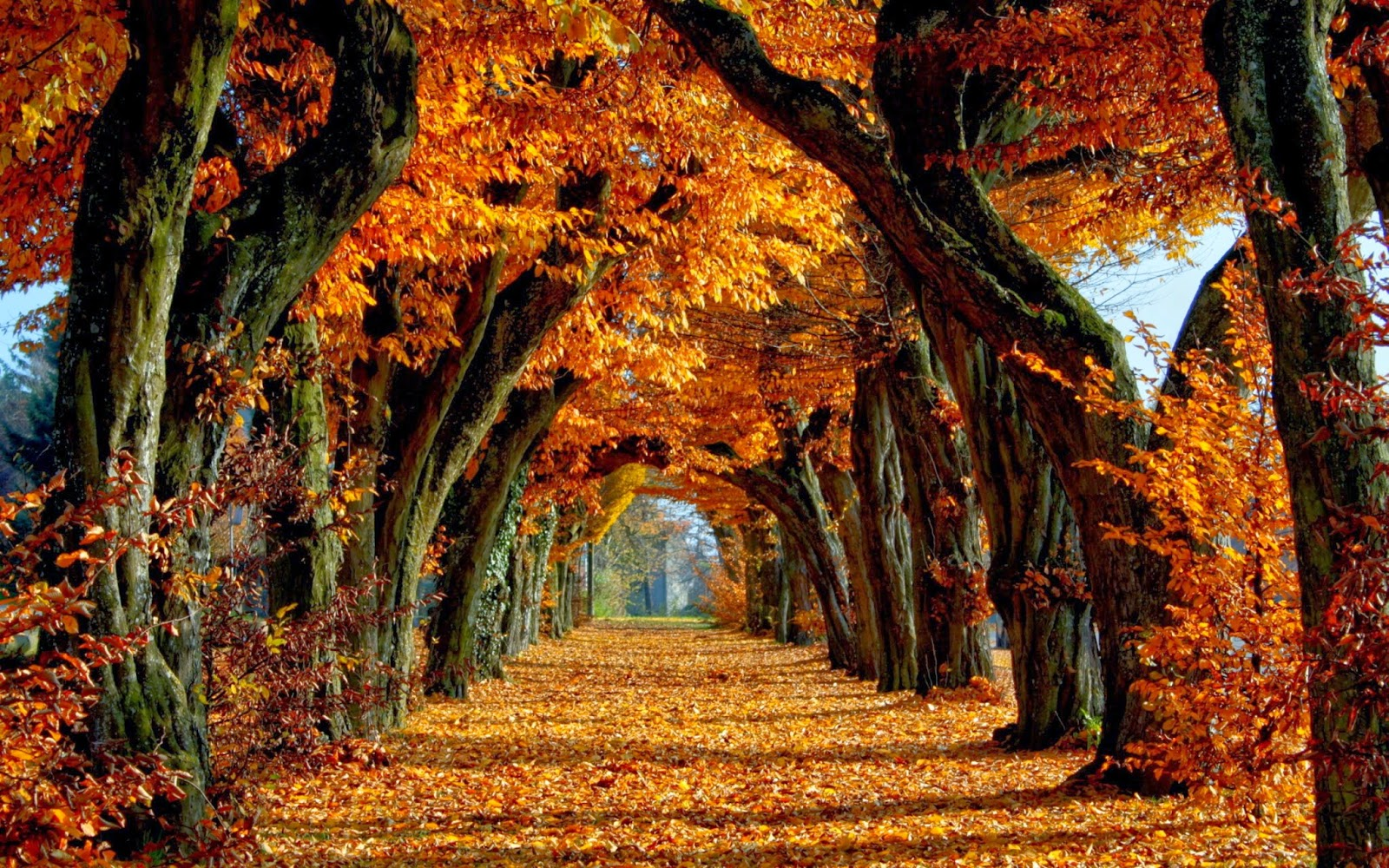Autumn Desktop Wallpaper 2014 Picture Gallery 1600x1000