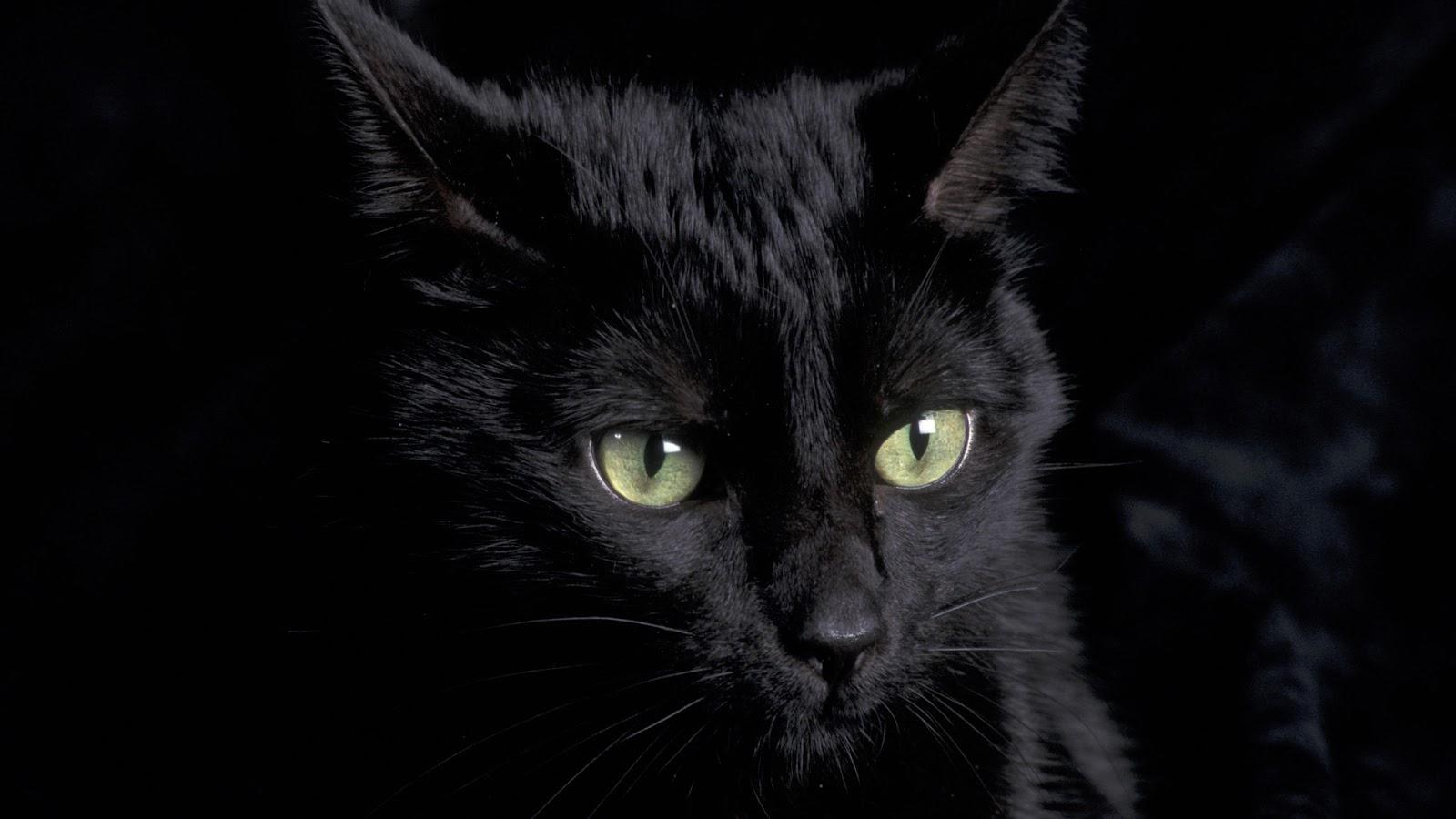 43 Cute Black Cat Wallpaper On Wallpapersafari