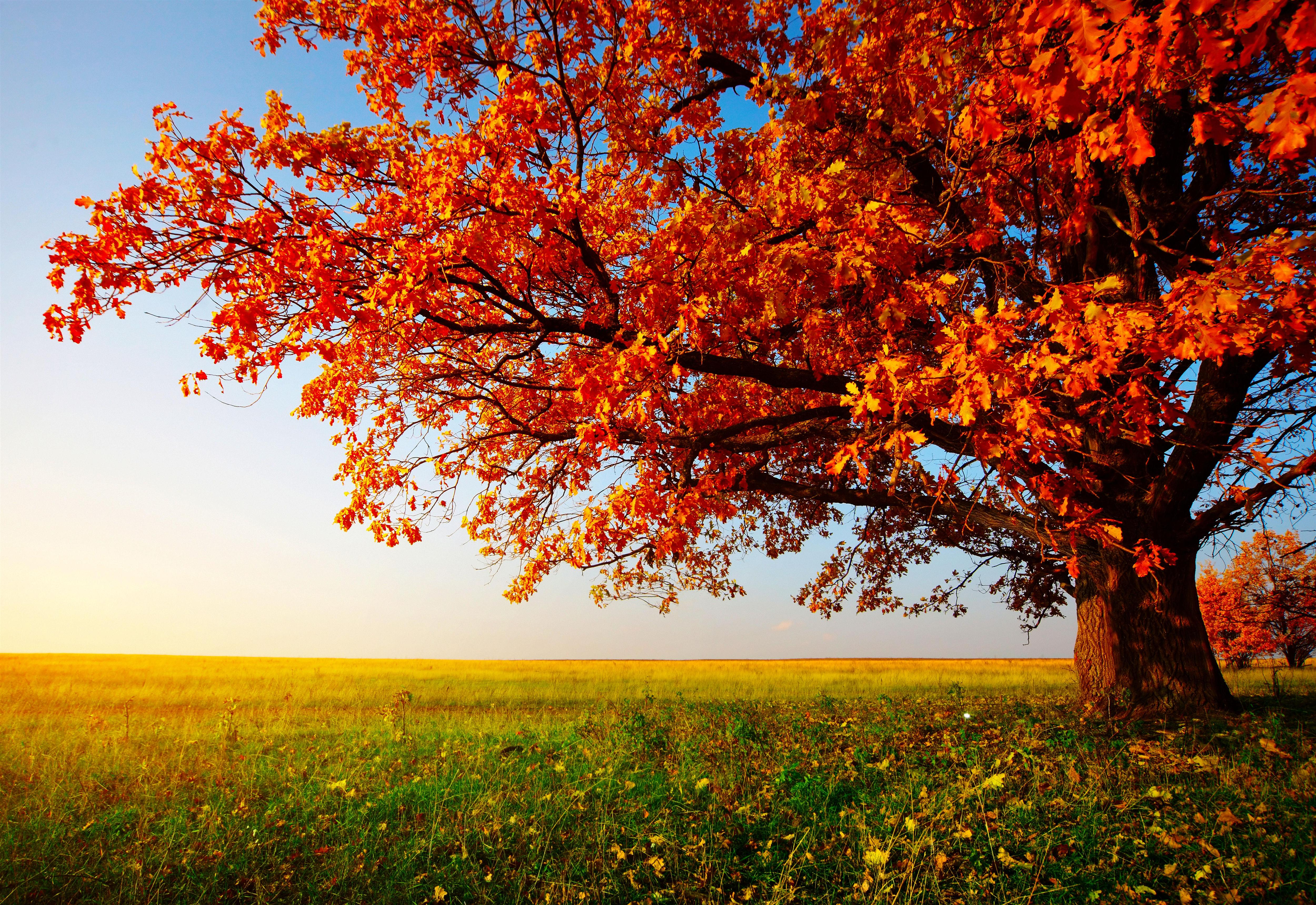 Autumn Tree Wallpaper Wallpapersafari