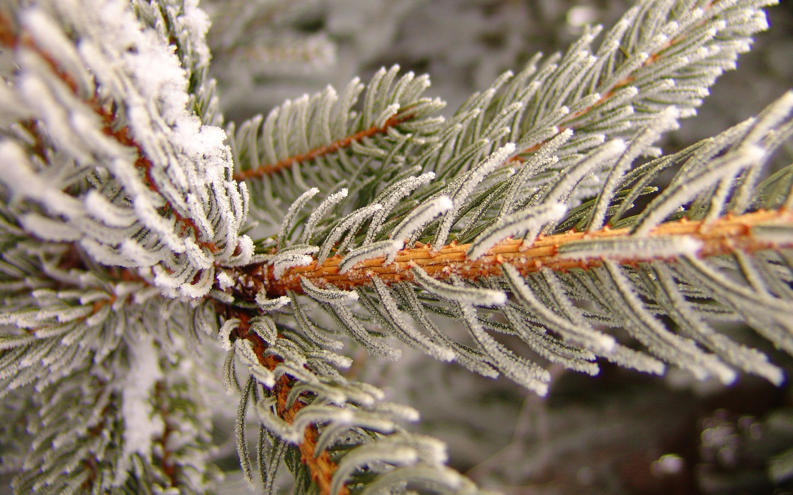 Snow covered tree branch Winter Wallpaper Pinterest 2560x1600