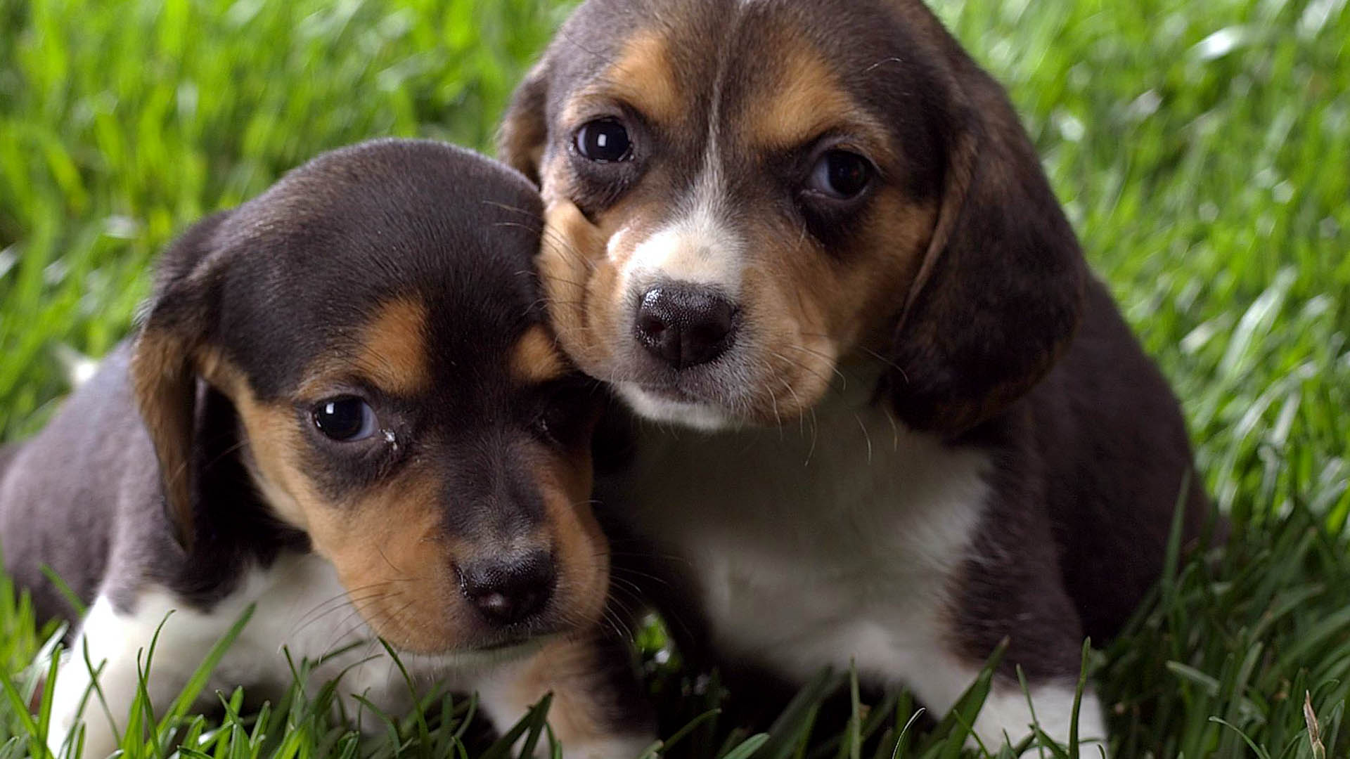 Cool Funny Puppies Dog Awesome Wallpapers HD 1920x1080