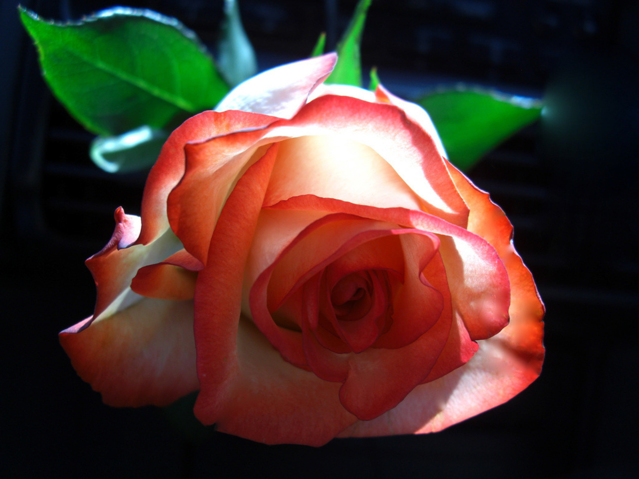 Free Download Beautiful Color Roses Wallpaper 18577533 1280x960 For Your Desktop Mobile Tablet Explore 48 Beautiful Colours Wallpapers Beautiful Rose Wallpapers Pretty Color Wallpaper Beautiful Roses Pictures Wallpapers