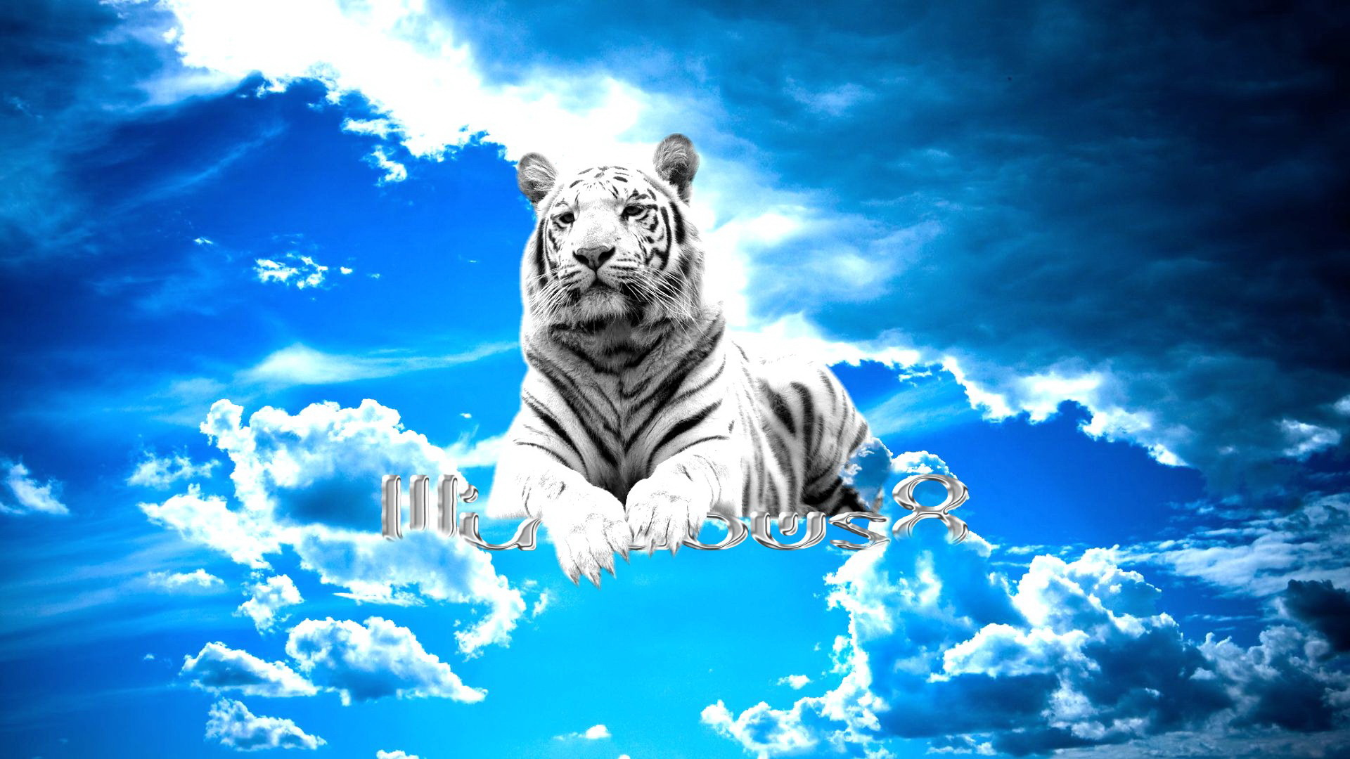 фото на рабочий стол-белые тигры