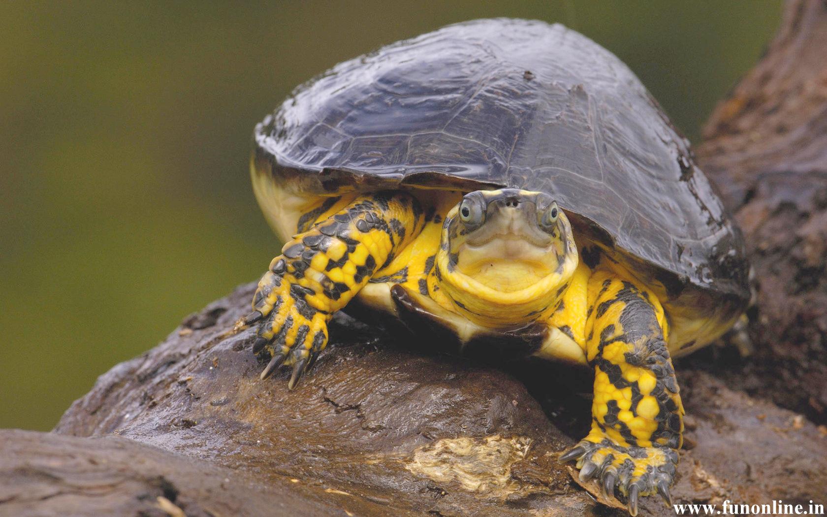 Cute turtle wallpaper wallpapersafari - Cute turtle pics ...