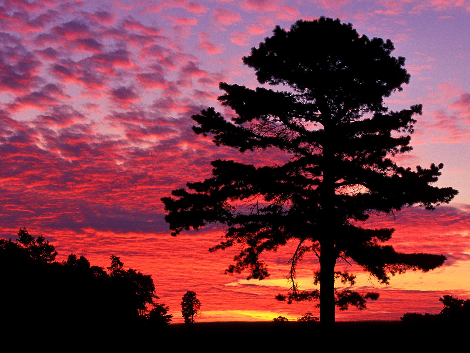 HQ Silhouetted Pine At Sunset Kentucky Wallpaper   HQ 1600x1200