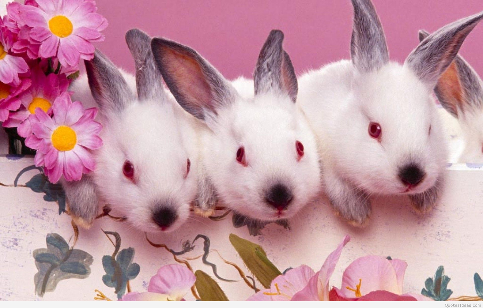 Happy Easter bunny wallpapers and quotes 1920x1227