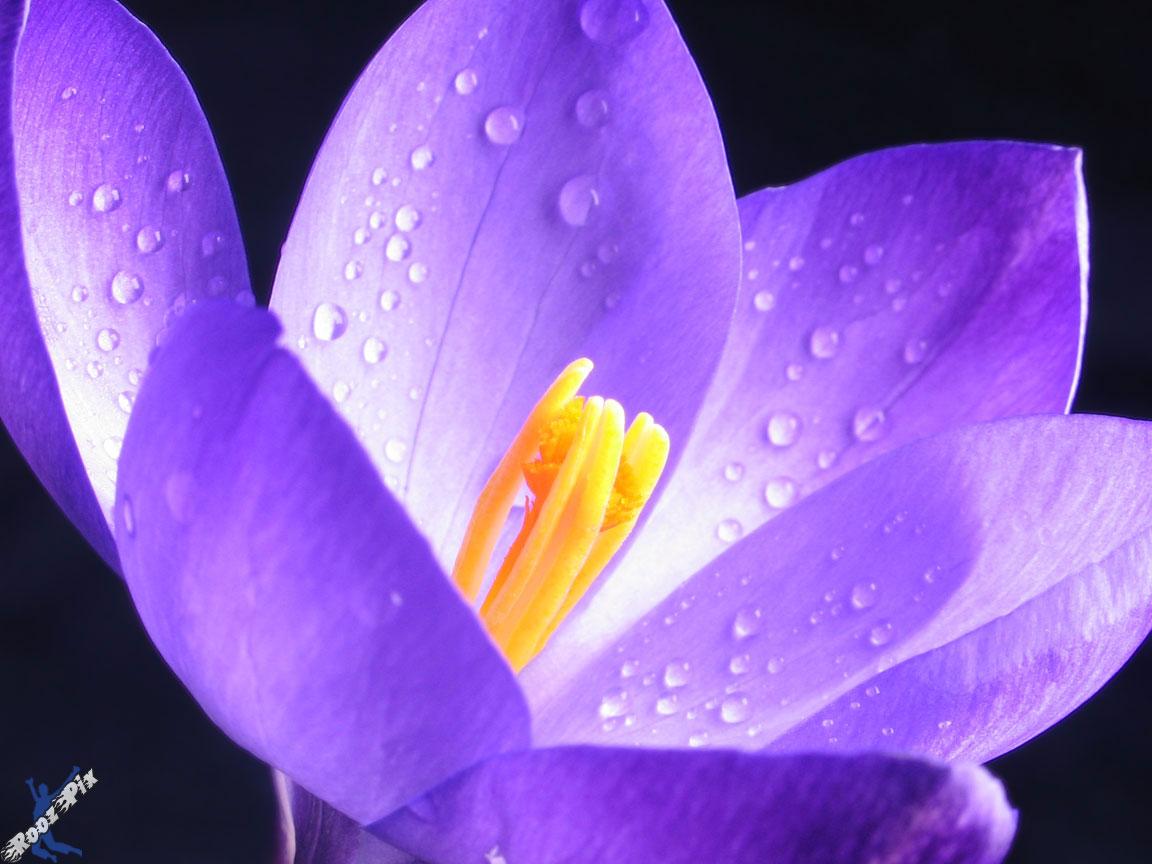 Pretty purple flower names mightylinksfo