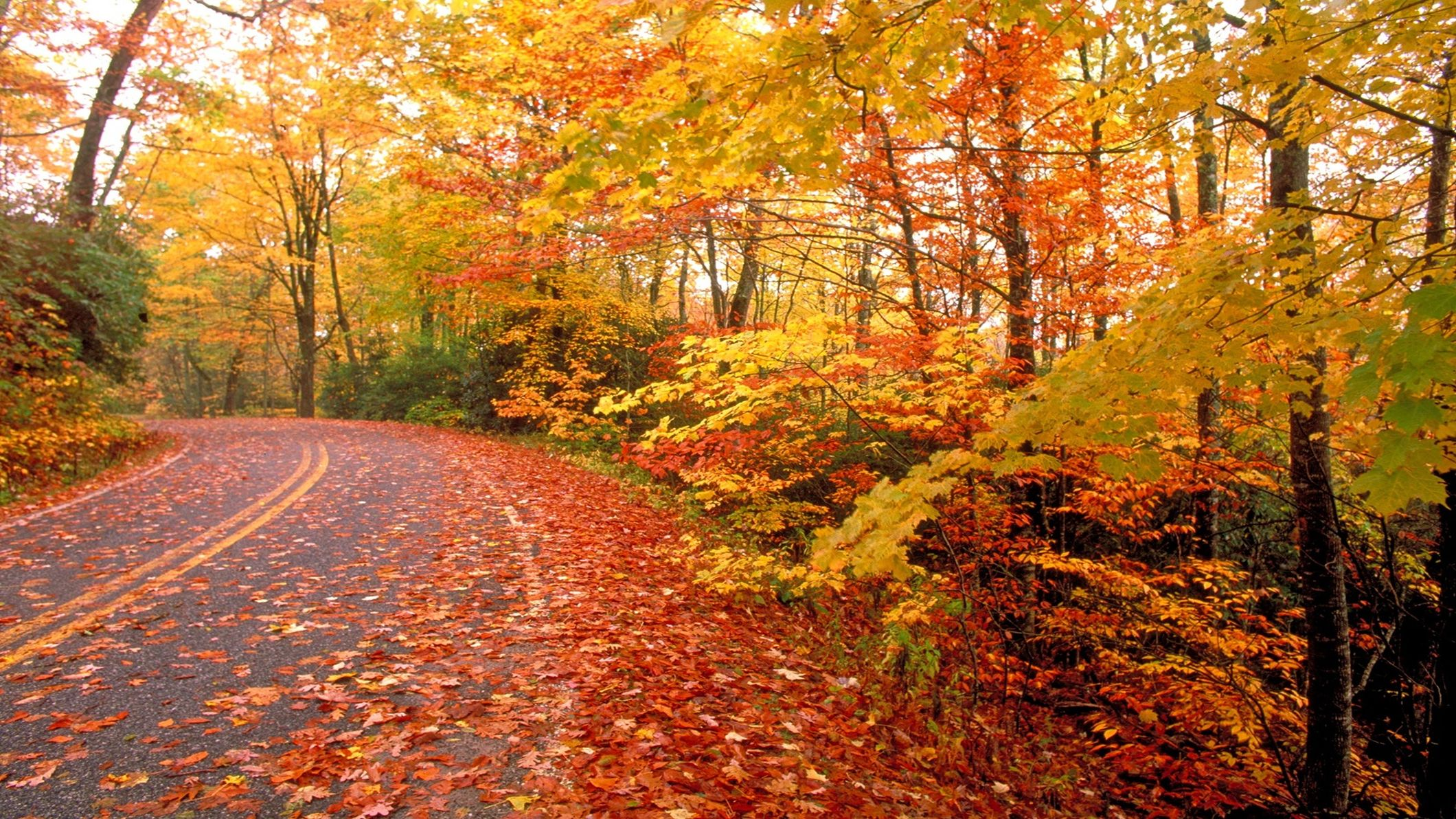 67+] Nature Fall Wallpaper on WallpaperSafari