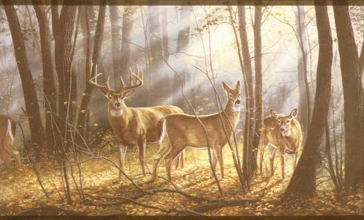 Wallpaper By Topics Lodge Wildlife   Wallpaper Border 525x317