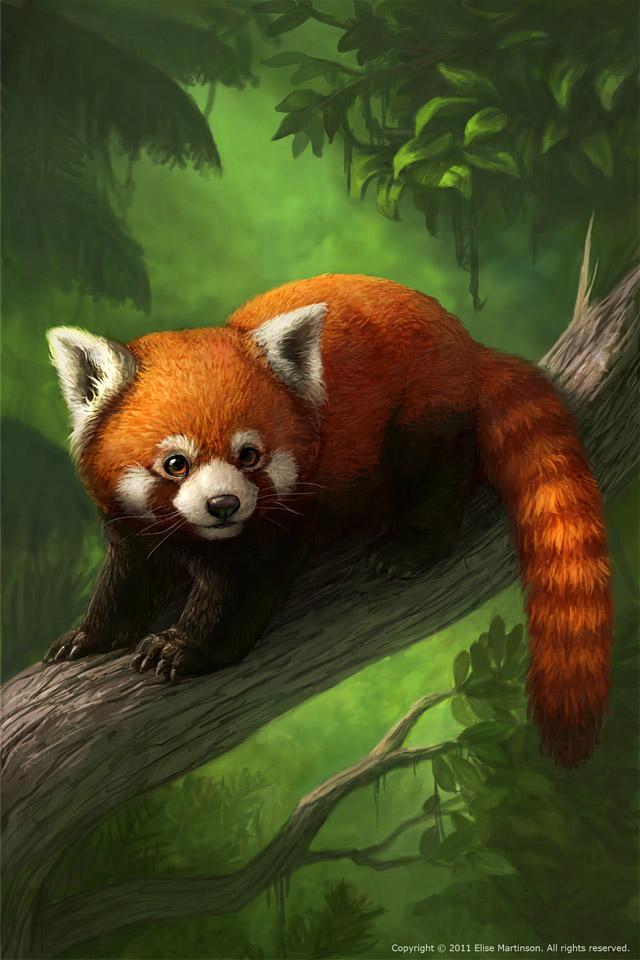 46 Red Panda Iphone Wallpaper On Wallpapersafari