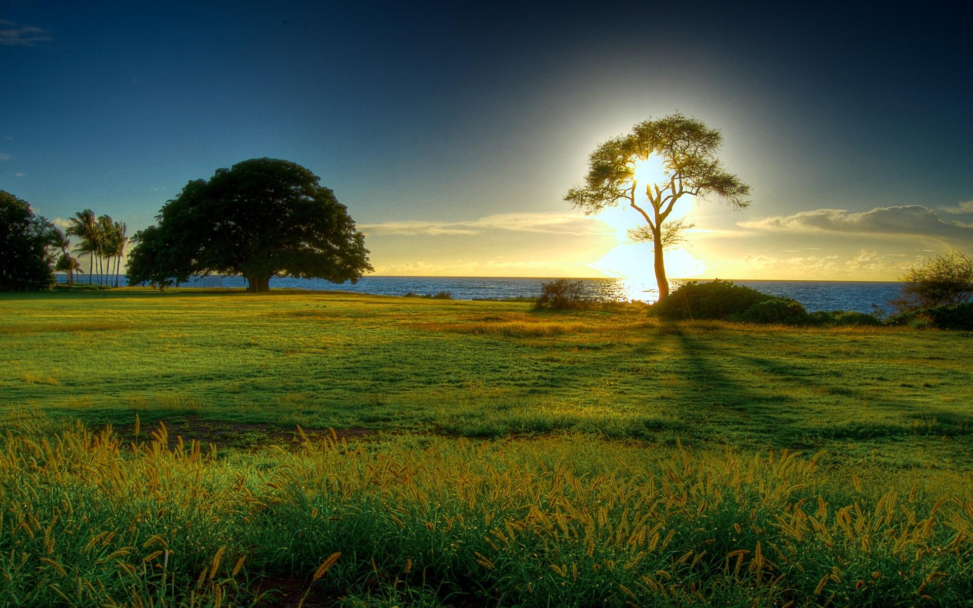 природа рассвет деревья  № 1158231 бесплатно