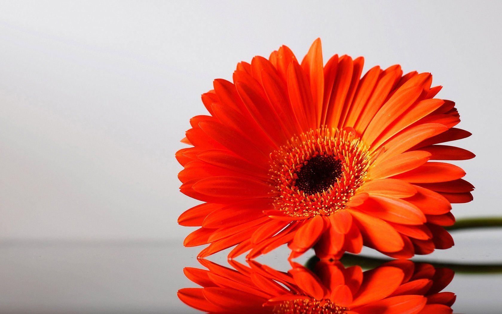20 Orange Flower Wallpapers 1680x1050