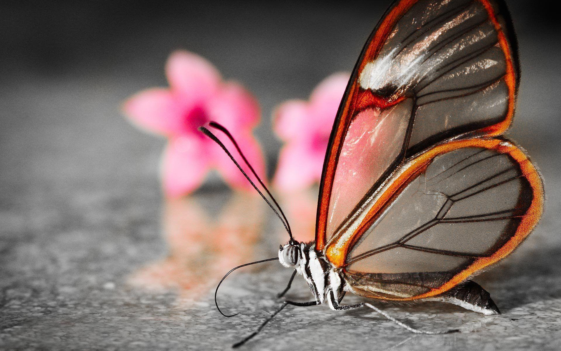 3D Butterfly Wallpapers 1920x1200