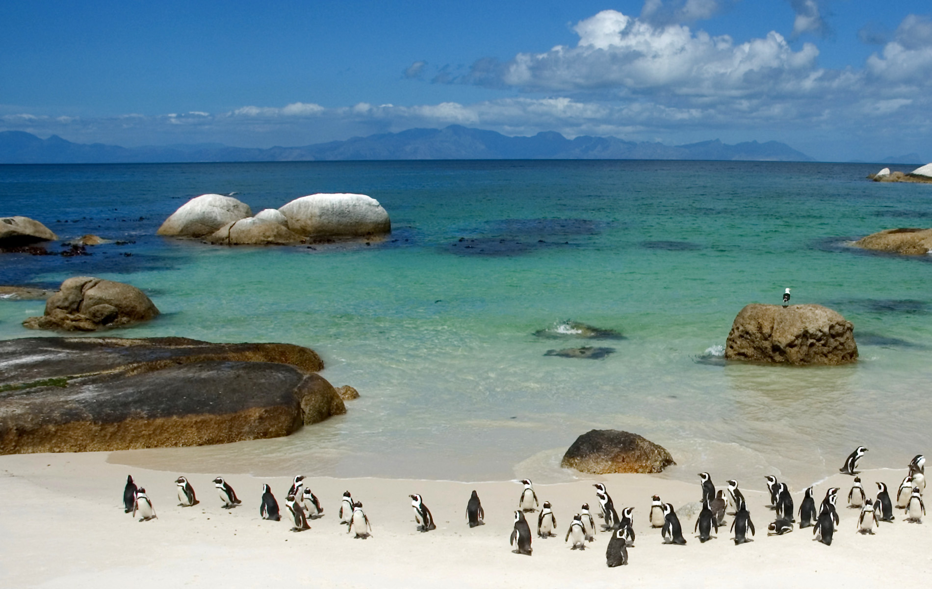 Penguins on Boulder Beach South Africa   Wallpaper 420 1900x1200