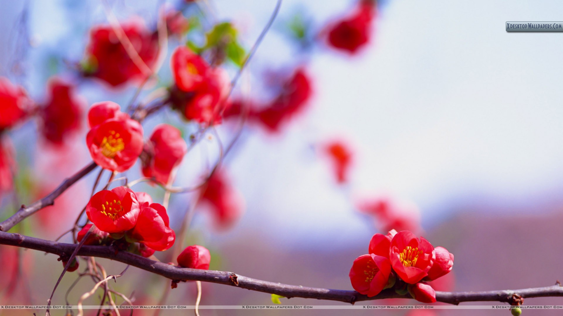 Bunches of Small Red Flowers Wallpaper 1920x1080