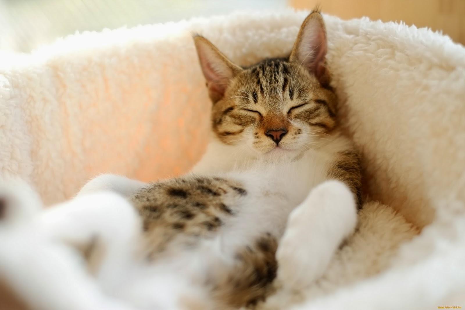 cute cats Download Sleeping cat wallpaper Sleeping cat wallpaper 1600x1067