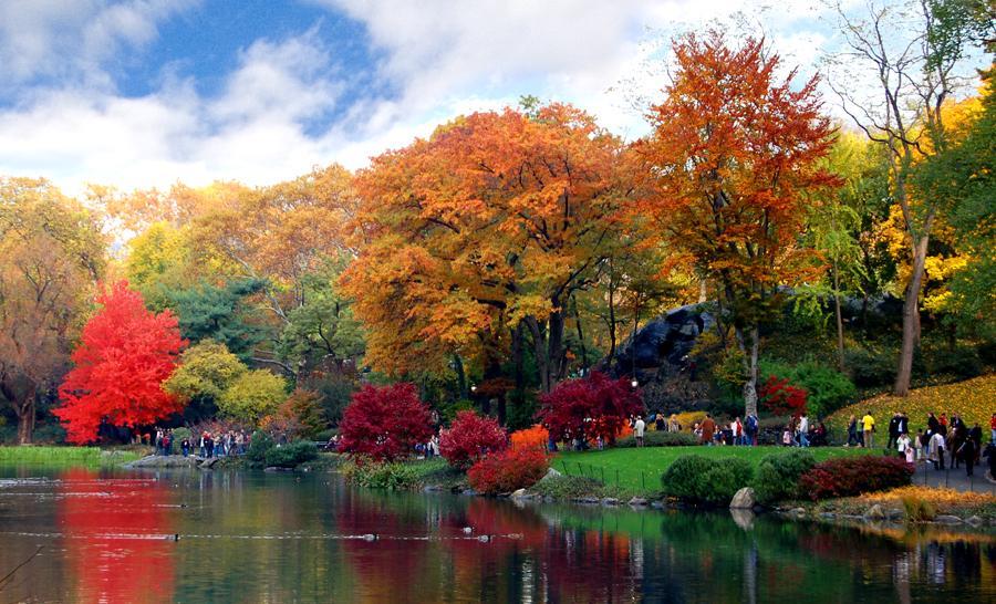 Central Park Autumn Wallpaper 900x546