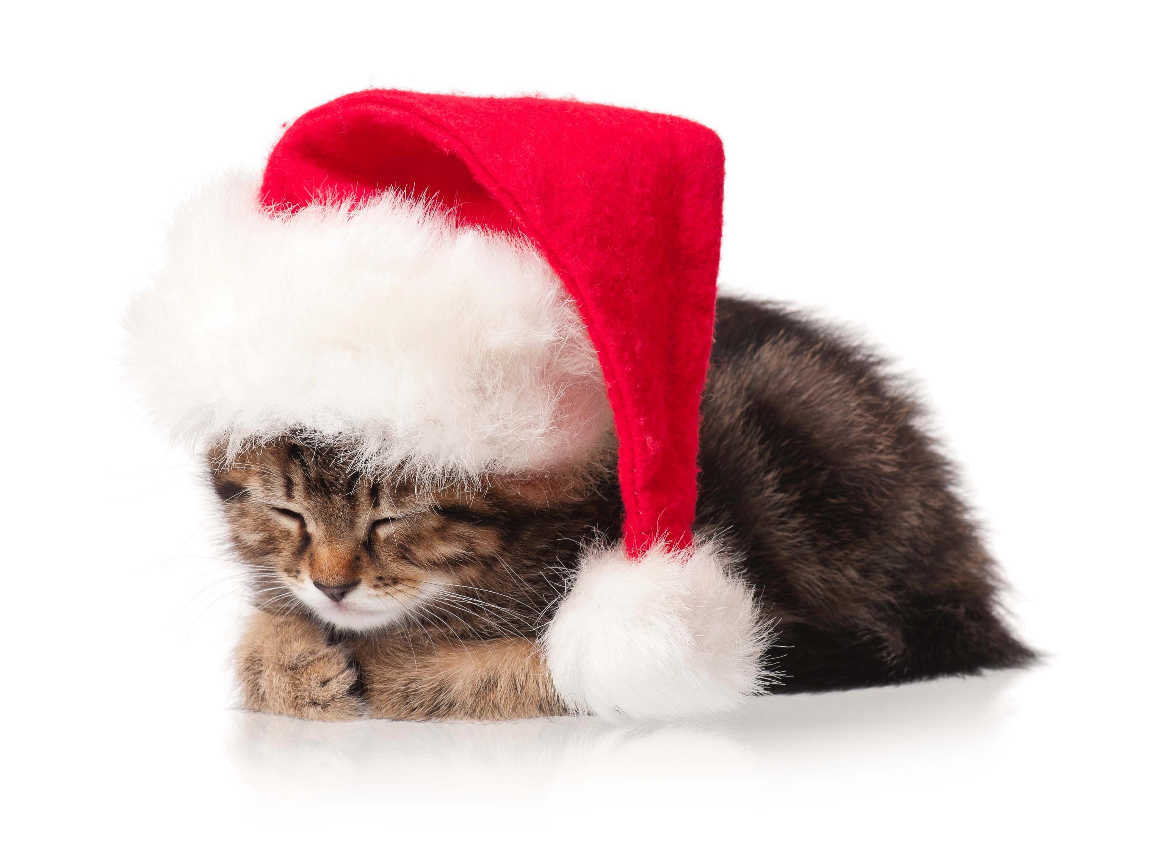 Cat in the Hat Wallpaper 3876x2908