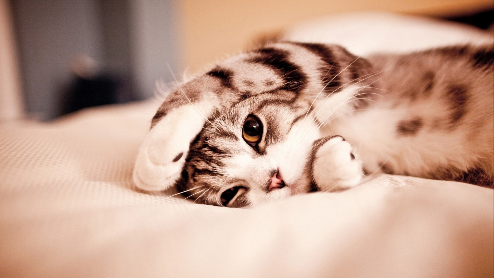 1920x1080 Cute Kitty Desktop Pc And Mac Wallpaper Pictures 1920x1080