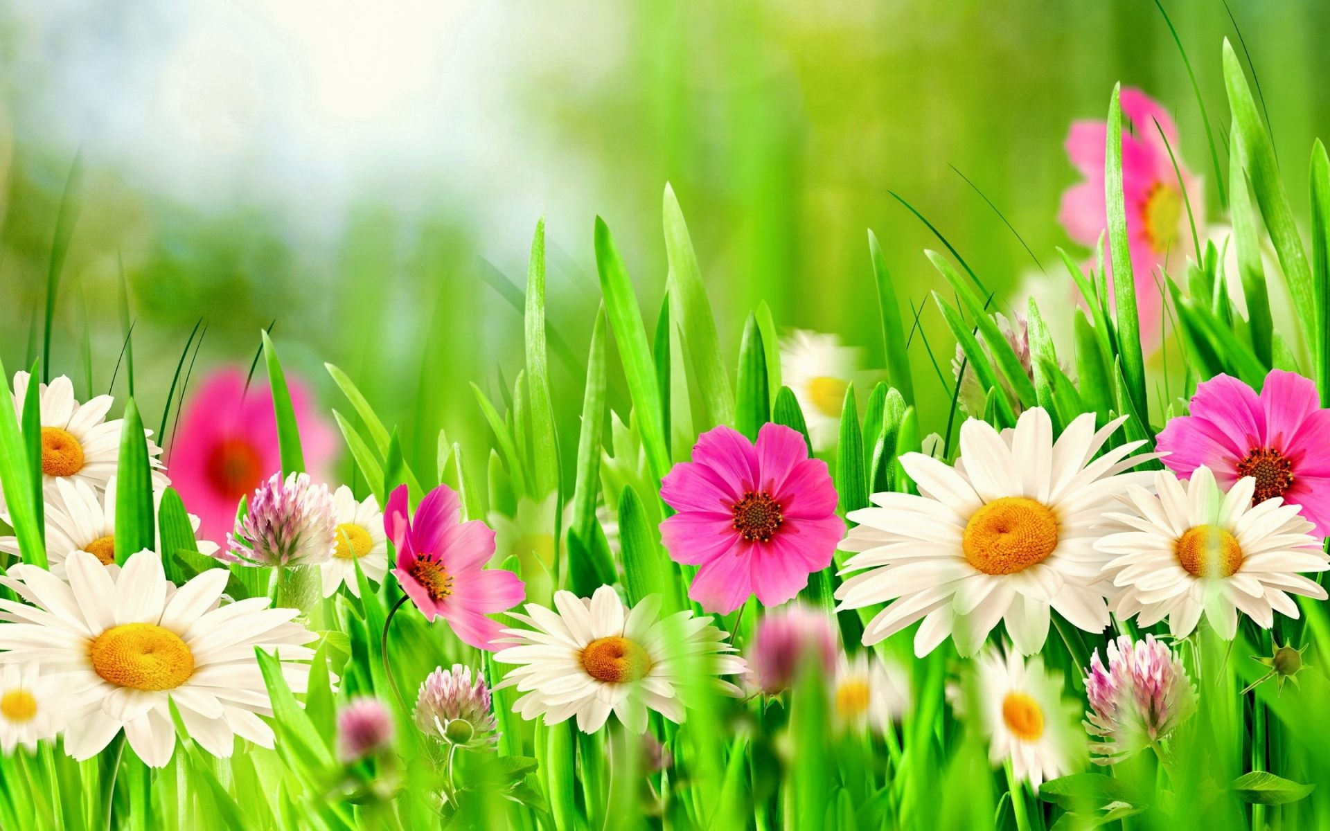 Spring Flowers Wallpaper 38 Spring Flowers HD Wallpapers 1920x1200