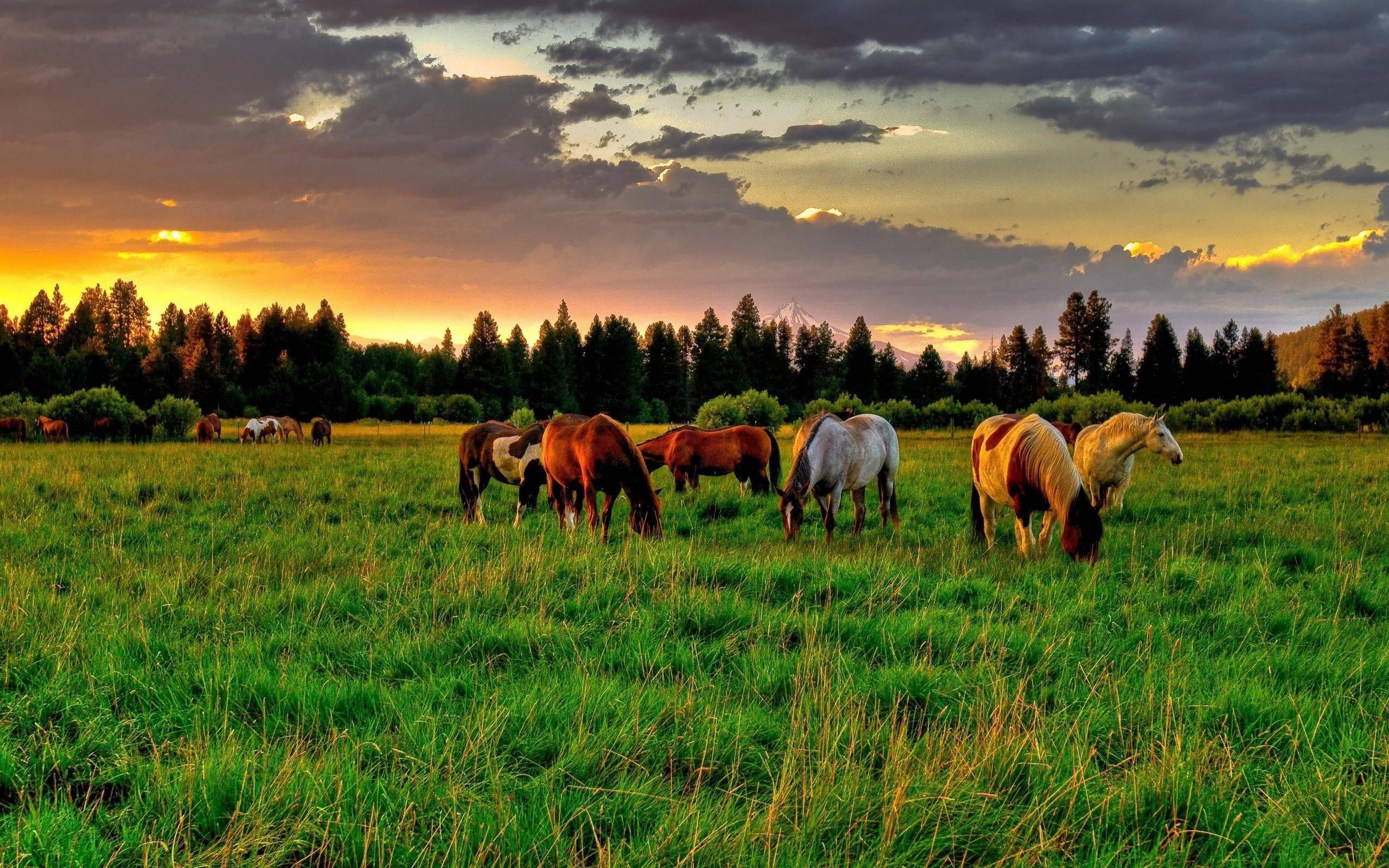 Horse Desktop Backgrounds 2560x1600