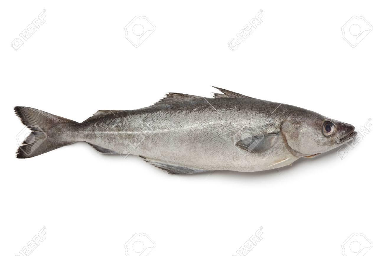 Fresh Atlantic Pollock Fish On White Background Stock Photo 1300x866