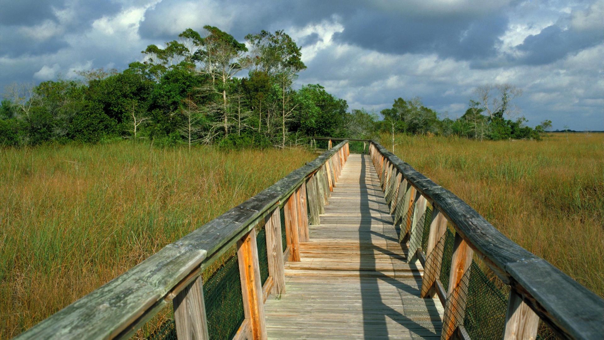 florida everglades boardwalk hammock mahogany trail backgrounds 1920x1080