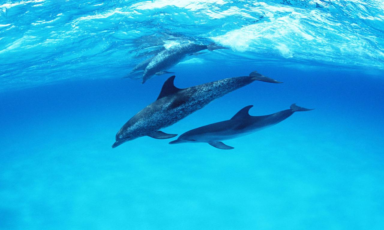 Cute Dolphin Wallpaper 10207 Hd Wallpapers in Cute   Imagescicom 1280x768