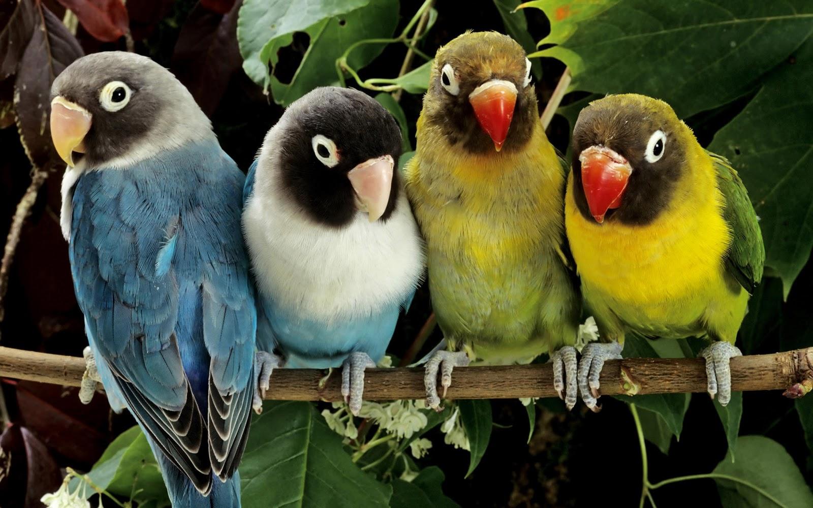 Magazine Wallpaper Birds HD widescreen Wallpaper 1600x1000