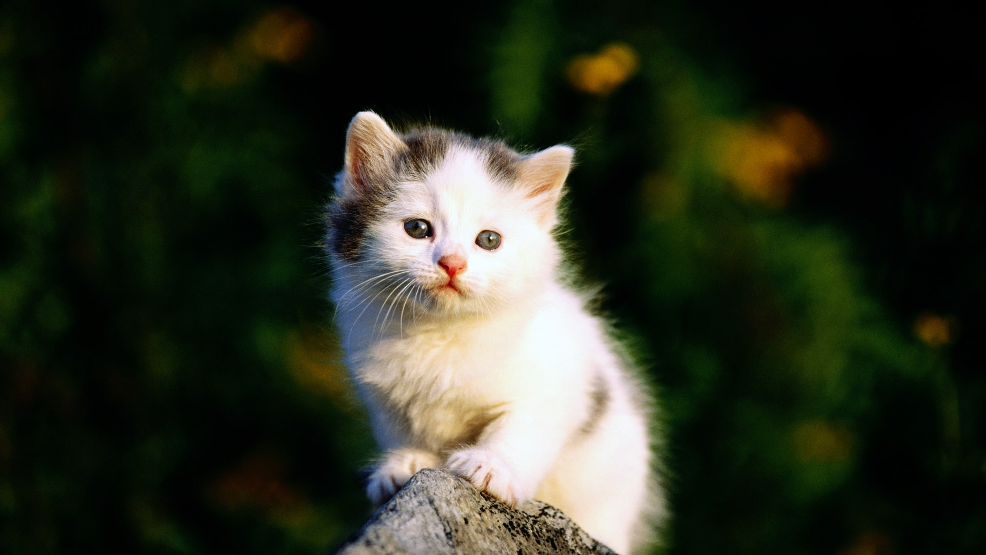 Beautiful cute and sweet cat wallpapers are waiting for your to 1920x1080