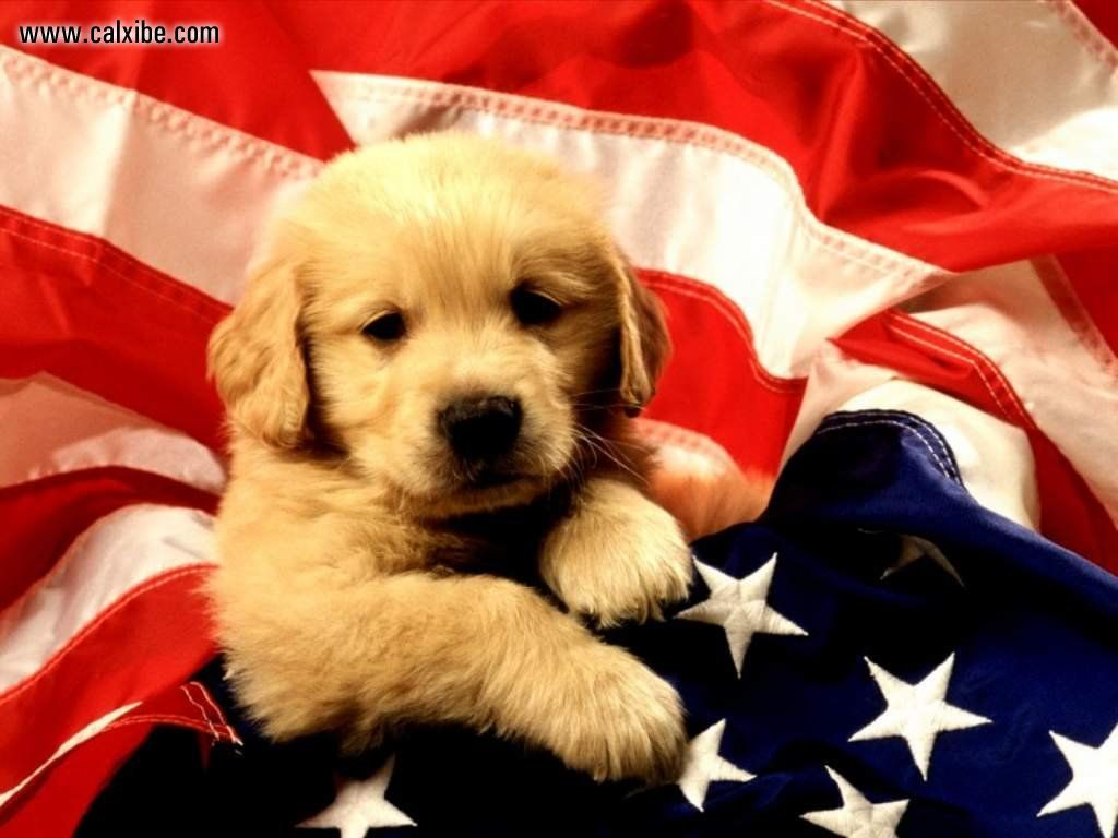 4th of July Holiday Hours   Sit Stay n Play Dog Park 1024x768