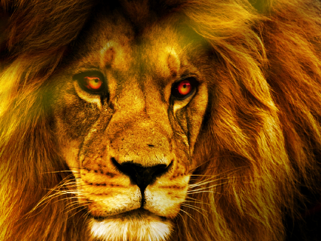 Free Download Lion Wallpaper Hd 1024x768 For Your Desktop Mobile