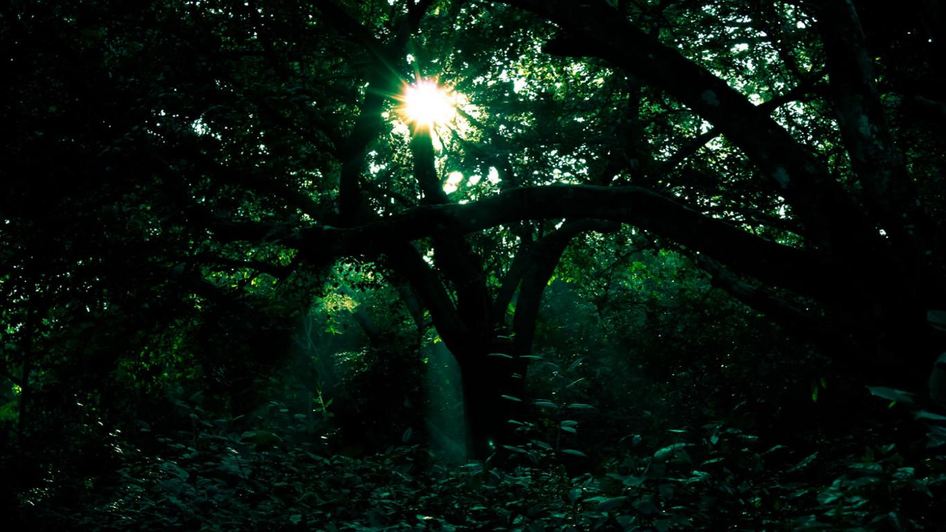 The Orchard dark green forest wallpaper 7905 hd wallpapers 1366x768