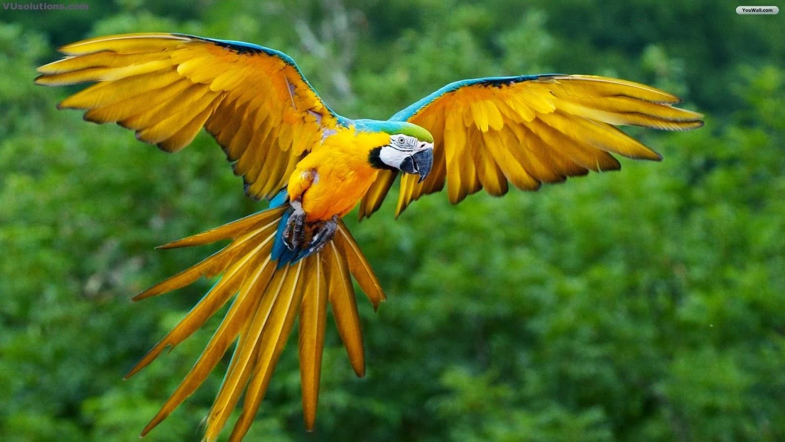 parrot hd wallpaper download 1080p parrot hd wallpaper download 1080p 1600x900