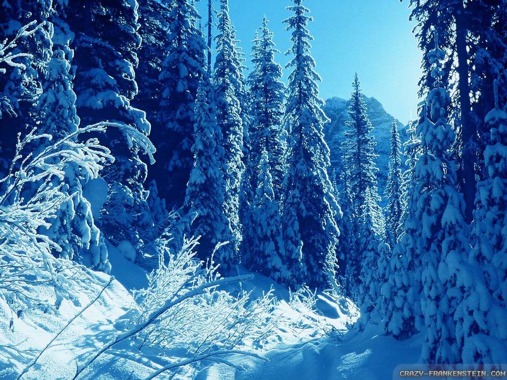 Nice Winter Wallpapers - WallpaperSafari