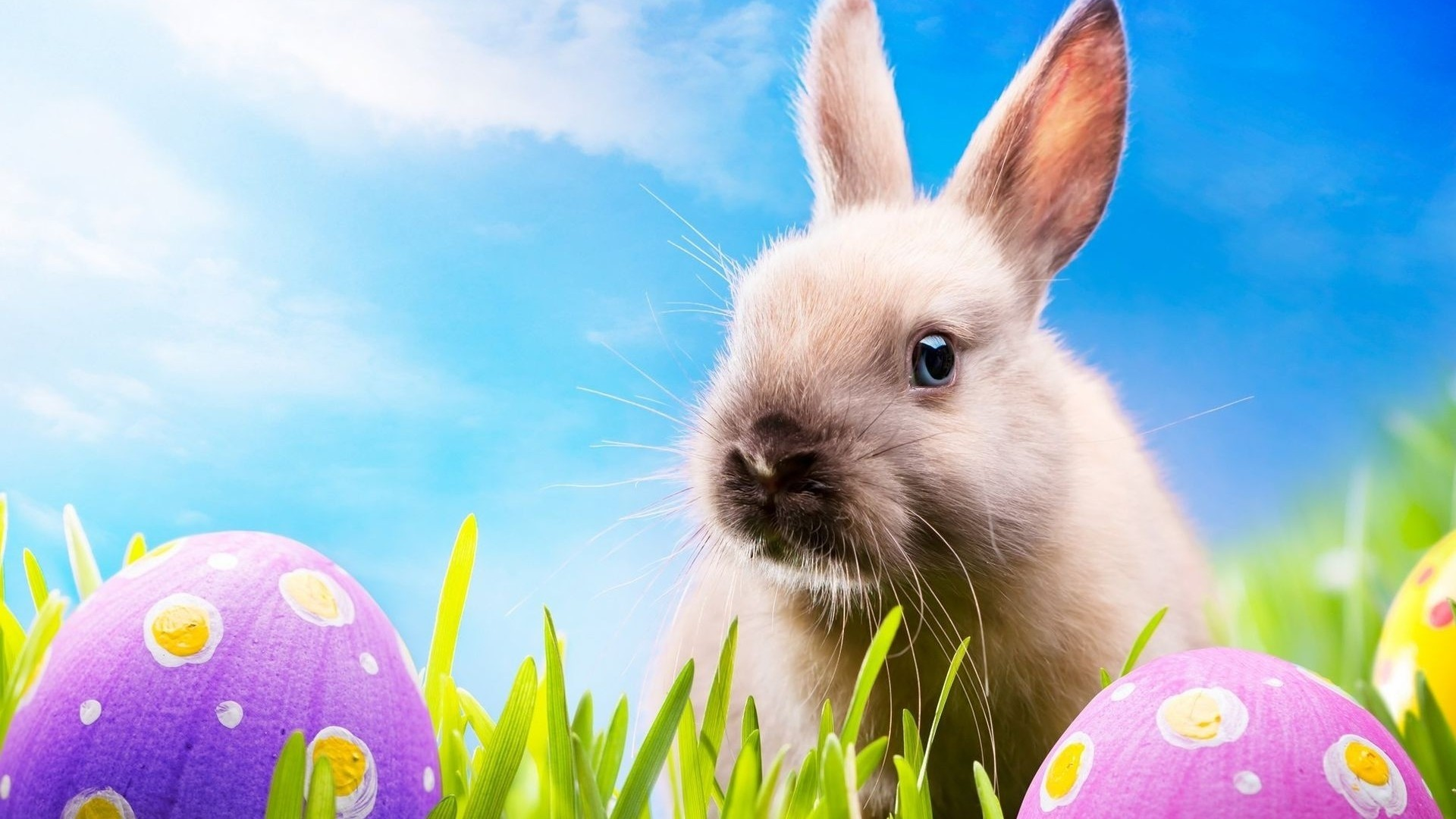 Cute Easter Bunny 2015 Desktop   New HD Wallpapers 1920x1080