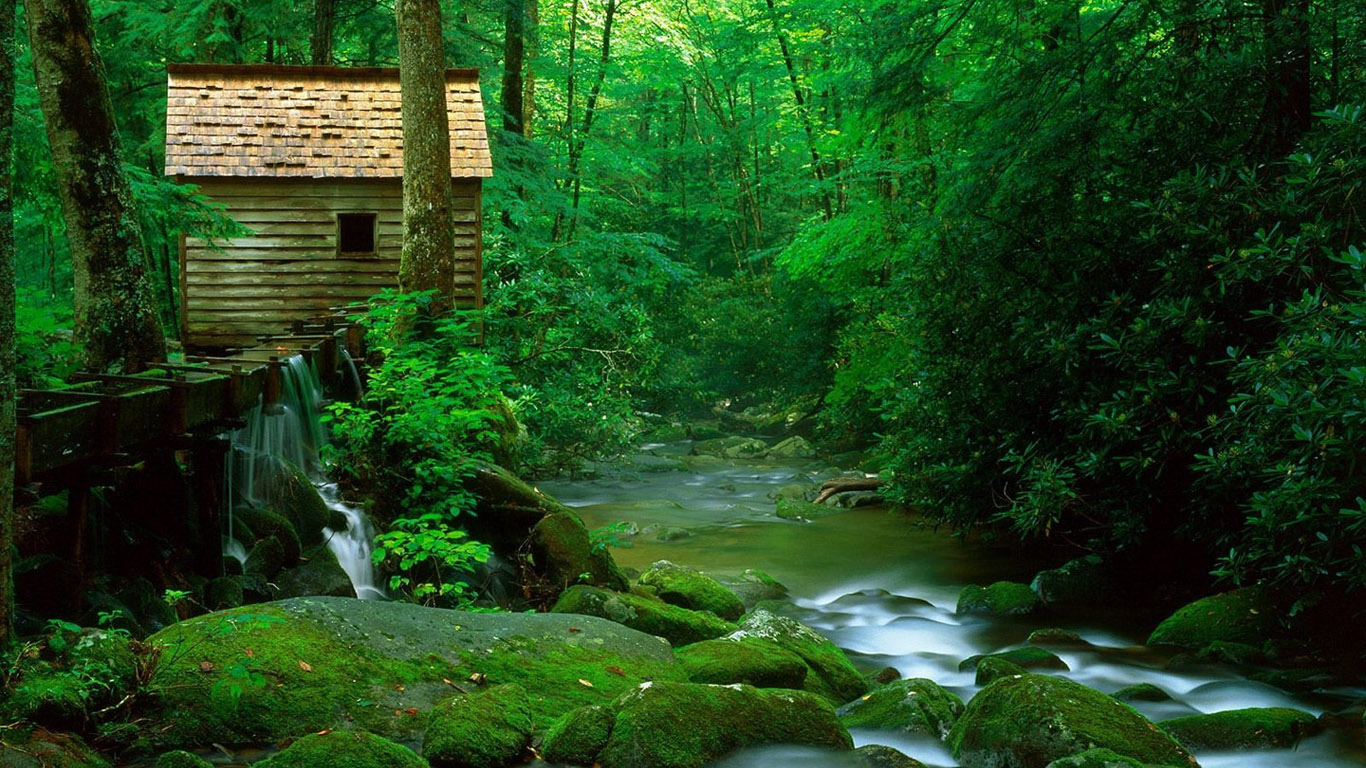 Green Forest view Okay Wallpaper 1366x768