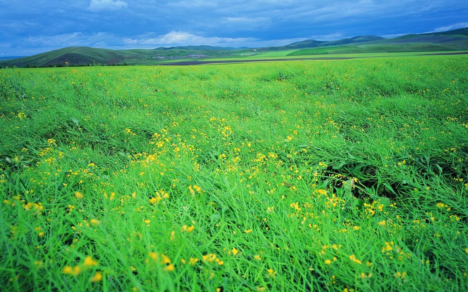 Green Fields in Green Mountain Wallpaper Widescreen Mobile 1600x1000
