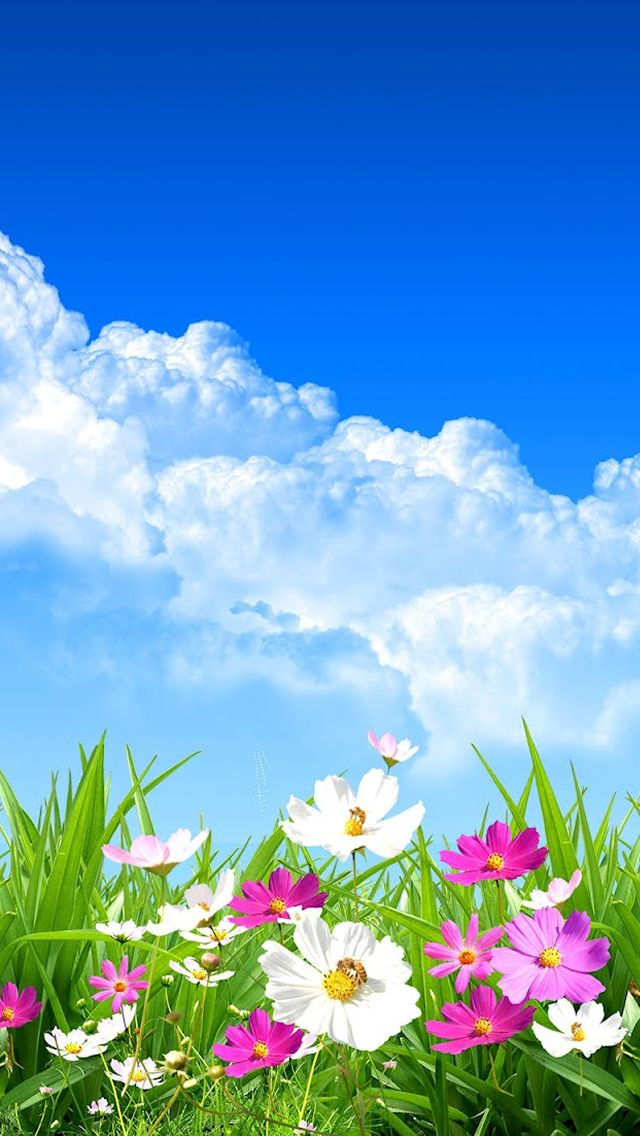 Spring Wallpaper for iPhone 5S - WallpaperSafari