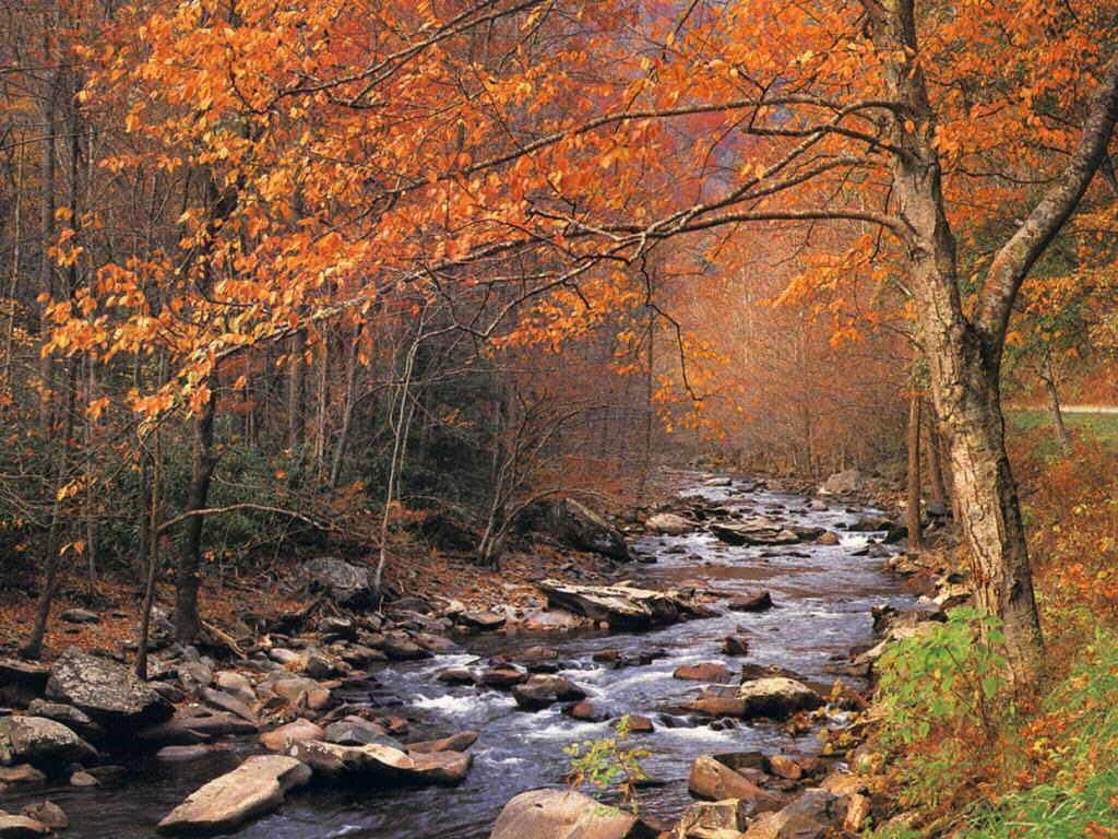 Free Autumn Wallpapers For Desktop - WallpaperSafari