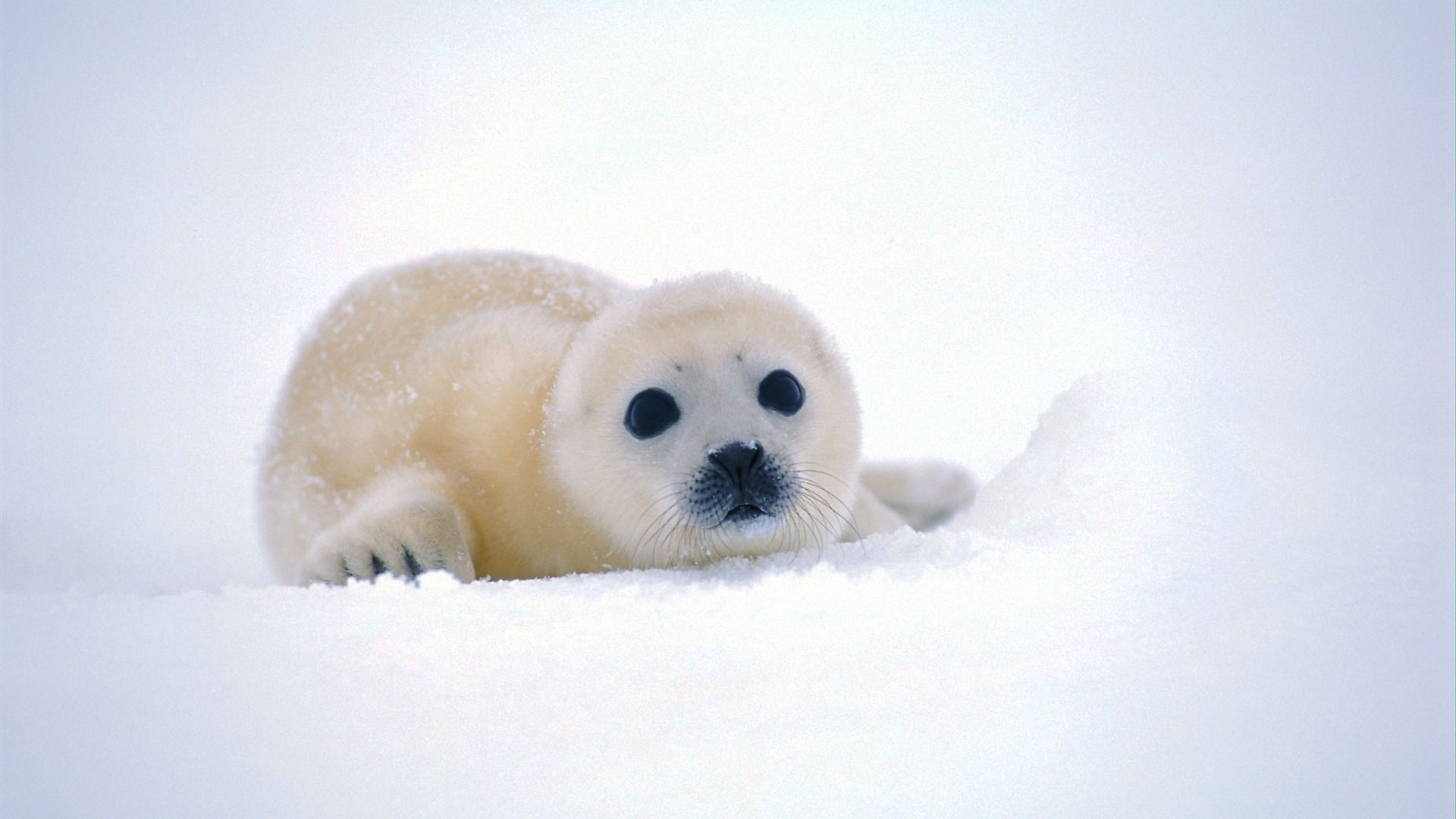 Pics Photos   Cute Animal Background Wallpapers 1920x1080