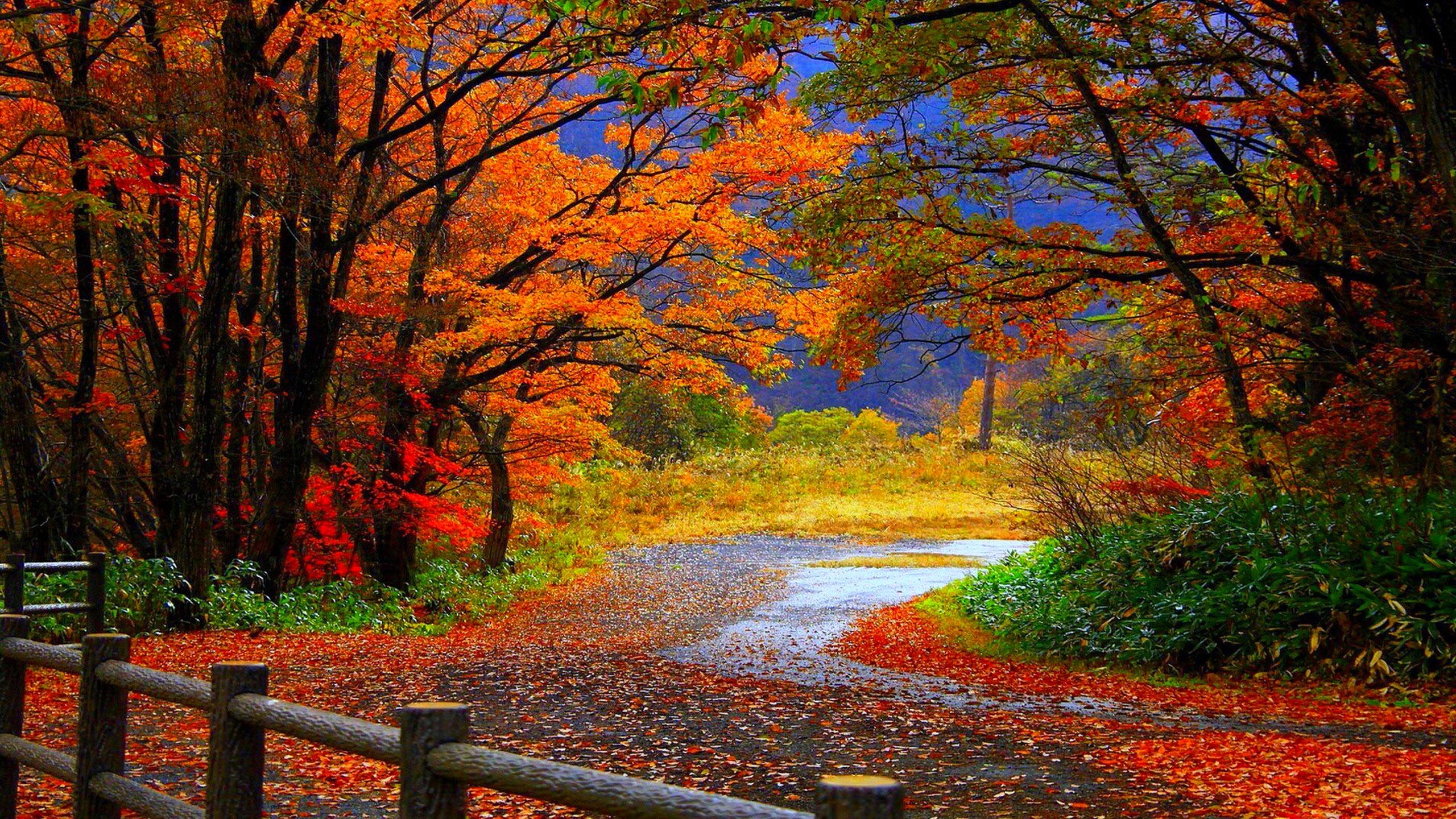 Autumn Tree in Fall HD Desktop Wallpaper Background download 2560x1440