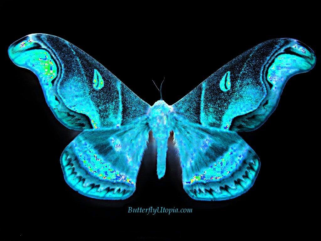 Butterfly Wallpaper 1024x768
