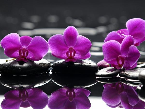 Purple Orchids Wallpaper Purple orchids reflection 600x450
