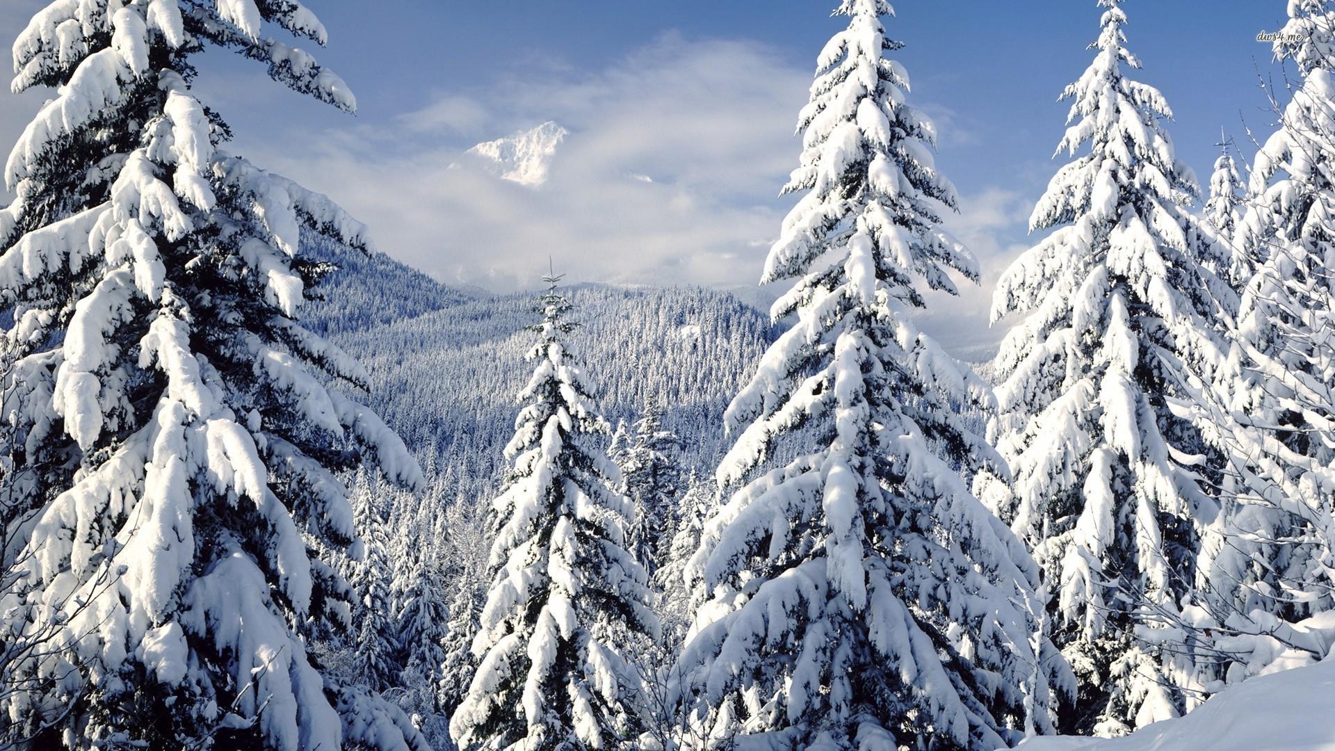Snowy trees wallpaper 1920x1080 1920x1080