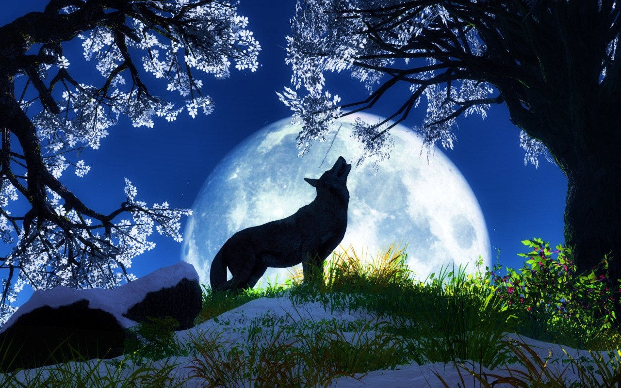 download Moon wolf Desktop Wallpapers Animal Wallpapers 1280x800